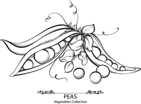 Hand Drawn Peas Vegetables Vector Free Vector In