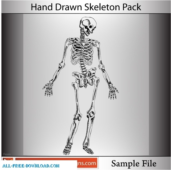skeleton free vector download 155 free vector for