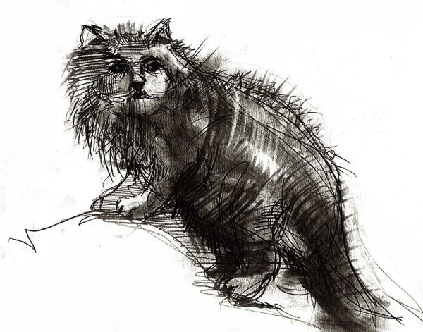 handdrawn line art cat 02 hd pictures
