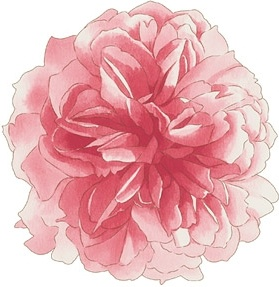 handpainted flowers layered psd 2