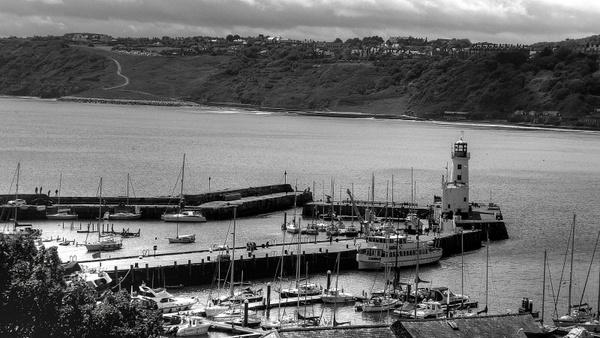 harbor black and white