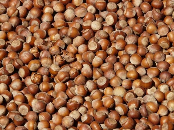 hazelnuts brown nuts