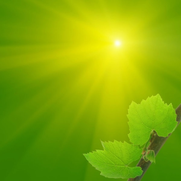 hd picture 5 of the leaves under the sun