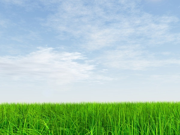 hd picture fresh blue sky and grass