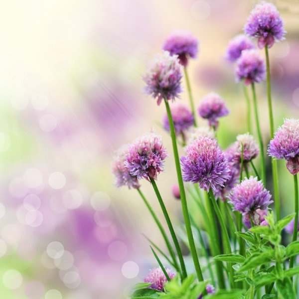 Flower Images Free Stock Photos Download 10 850 Free Stock Photos