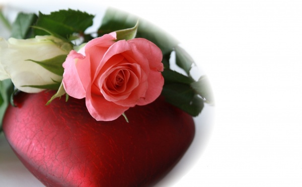 heart red rose