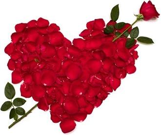 heartshaped rose petals stock photo