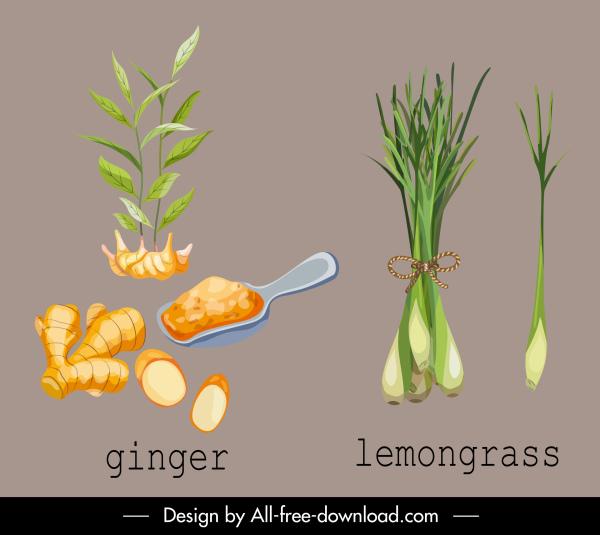 herbal plant icons ginger lemongrasss sketch