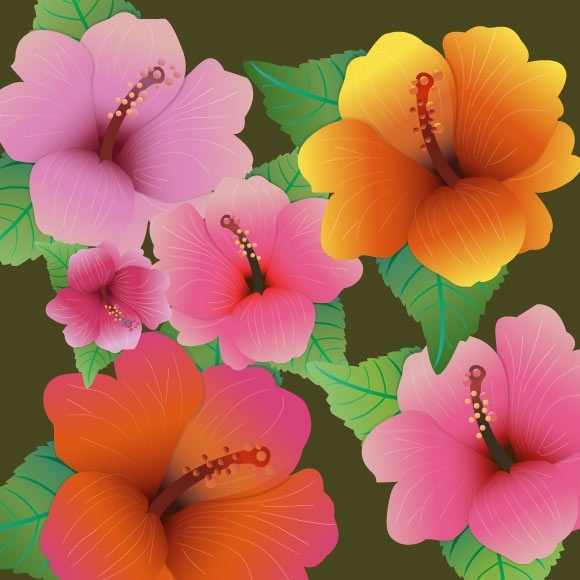 Hibiscus Flowers Vector Design With Color Style Free Vector In Adobe