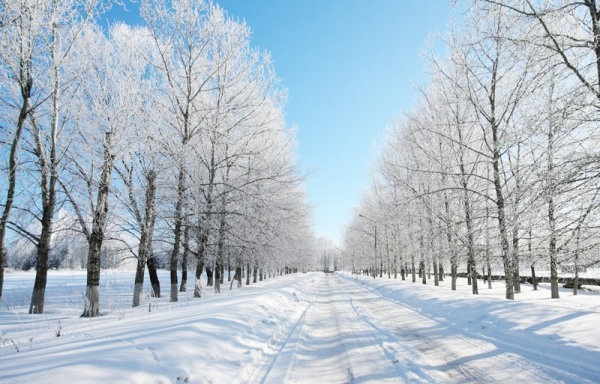 highdefinition picture of the winter landscape 7