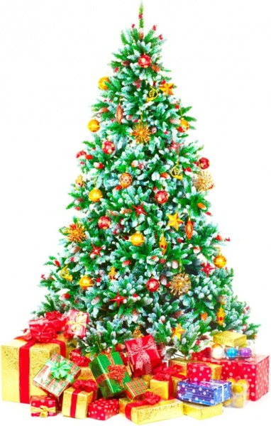 Images Of Christmas Trees.Highquality Pictures For Christmas Trees Free Stock Photos
