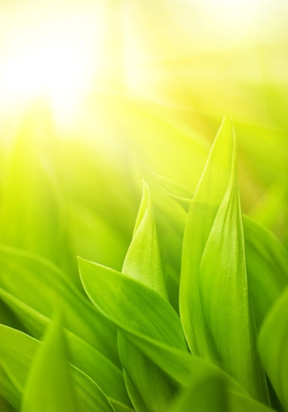 highquality pictures of green leaf background