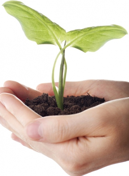 holding the picture of plant seedling