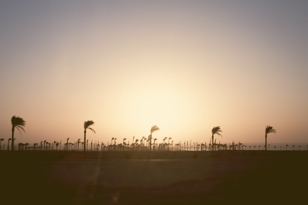 holiday horizon palm tree silhouette sun tree