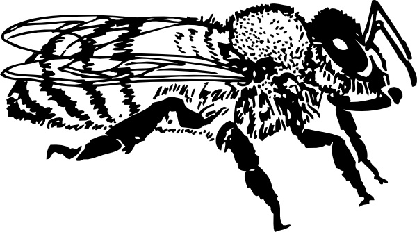 Honey Bee Clip Art Free Vector In Open Office Drawing Svg Svg Vector Illustration Graphic Art Design Format Format For Free Download 210 83kb