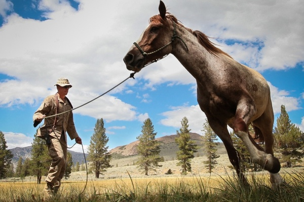 horse man army