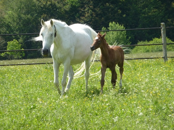 horse mare colt