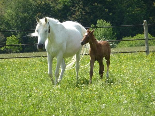 horse mare colt