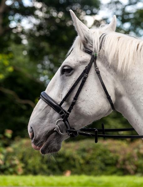 horse profile equine