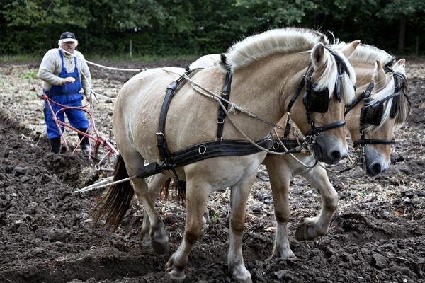 horses plow plowing