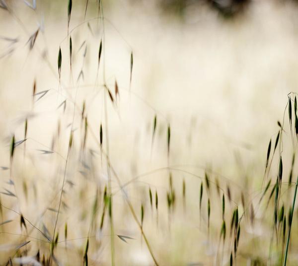 hss grass