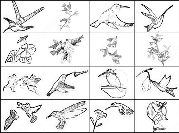 humming bird brush