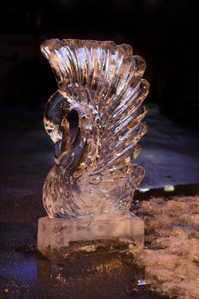 ice swan