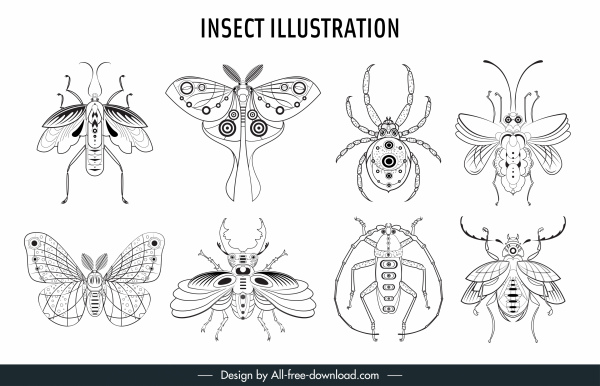 insects species icons black white handdrawn sketch