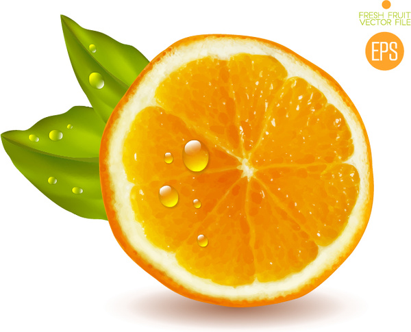 Juicy slice oranges vector set Free vector in Encapsulated