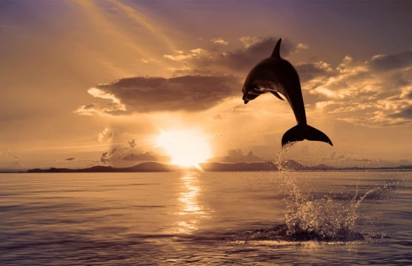 jumping dolphins 04 hd pictures