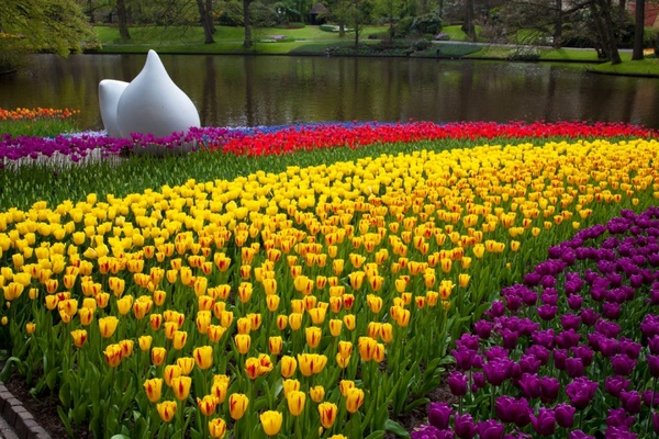 Image result for Keukenhof spring 600 x 400