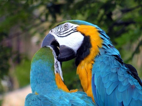 parrot images free stock photos download  100 free stock photos  for commercial use  format  hd