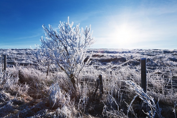 landscape with hoar frost