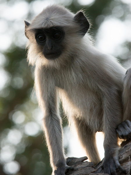 Monkey Images Free Stock Photos Download 205 Free Stock Photos For Commercial Use Format Hd High Resolution Jpg Images