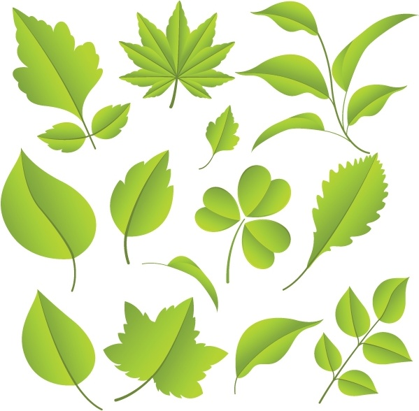 leaf 02 vector