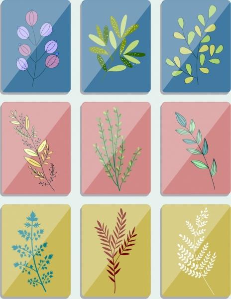 leaf background sets shiny colorful decor square isolation