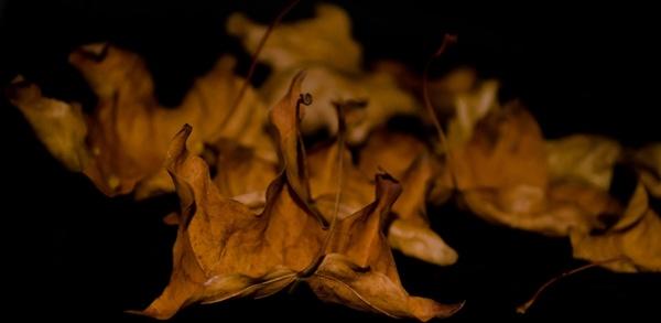 leaf leaves macro
