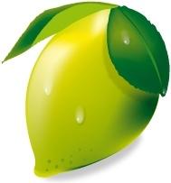 fresh lemon vector illustration on white background