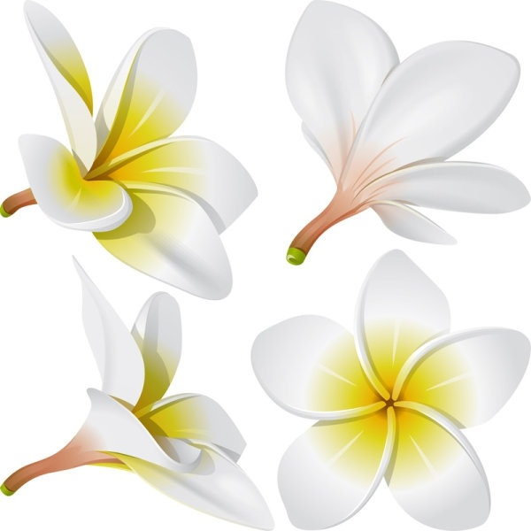 free frangipani flower vectors free vector download  10 773 free vector  for commercial use