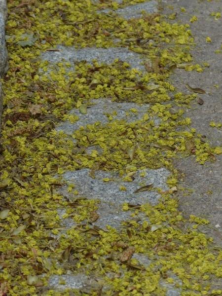 lime blossom pollen bee pollen