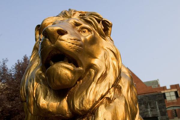 lion mugshot
