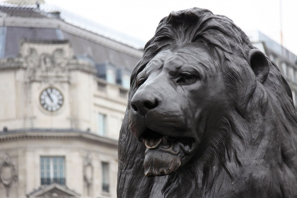 lion on the trafalgar square