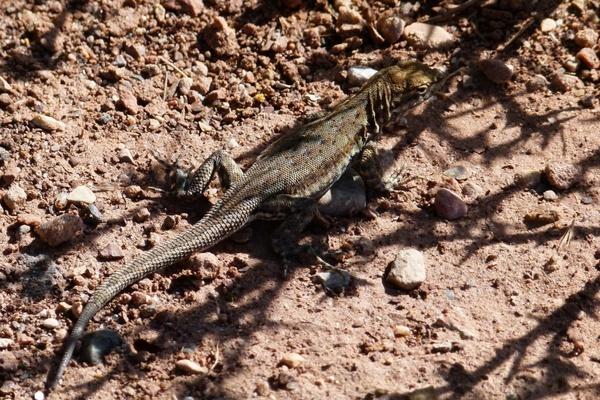 lizard reptile wild life