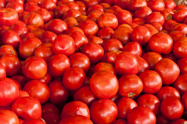 lots and lots of tomatoes