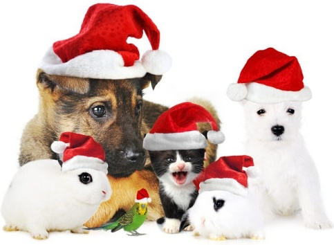 lovely christmas cat rabbit dog highdefinition picture