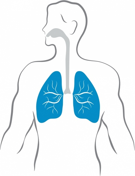 Lungs and human body