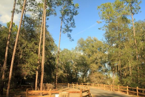 main road and camping area at big shaols state park florida