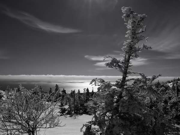 maine landscape black and white