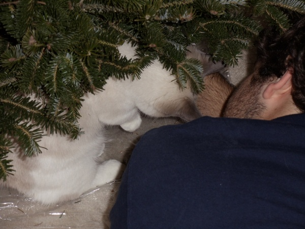 man amp cat with christmas tree