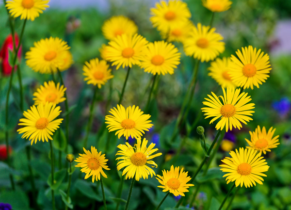 Many yellow flowers free stock photos in jpg format for free many yellow flowers mightylinksfo